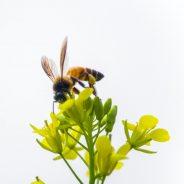 Beeandyou ist zukunftsorientiert – wo Nachhaltigkeit nicht nur ein Werbeslogan ist